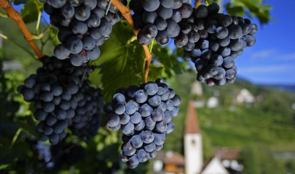 Merano wellbeing treatment with grape pomace
